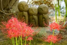 彼岸花と良縁地蔵 長谷寺