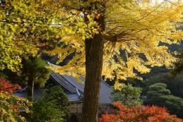 黄葉 円覚寺