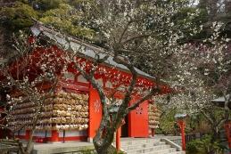 梅 荏柄天神社