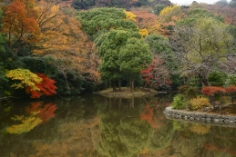 紅葉 鶴岡八幡宮(平家池)