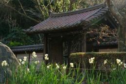 スイセン 瑞泉寺