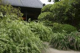 萩 寶戒寺