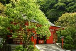 新緑 荏柄天神社