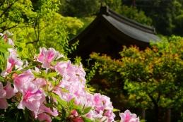 ツツジ 海蔵寺