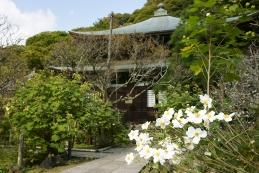 秋名菊 瑞泉寺