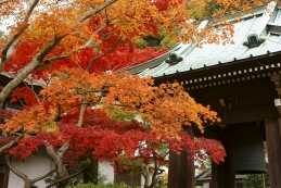 紅葉 海蔵寺