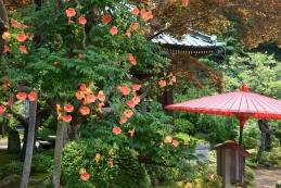 凌霄花(ノウゼンカズラ) 海蔵寺
