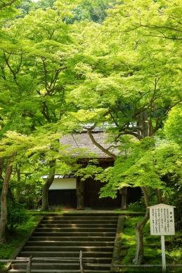 新緑 円覚寺居士林